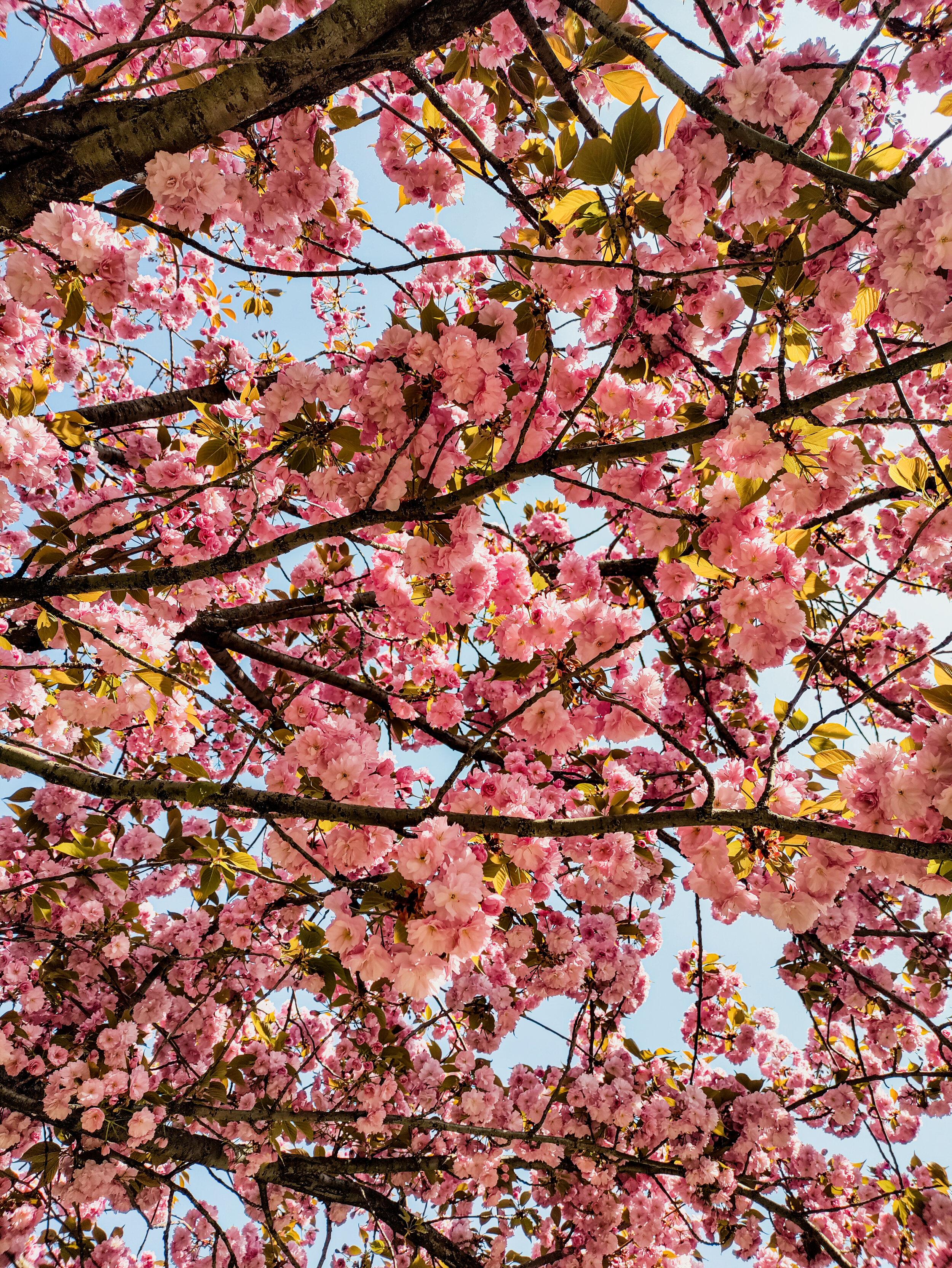 Full Spring (11).jpg