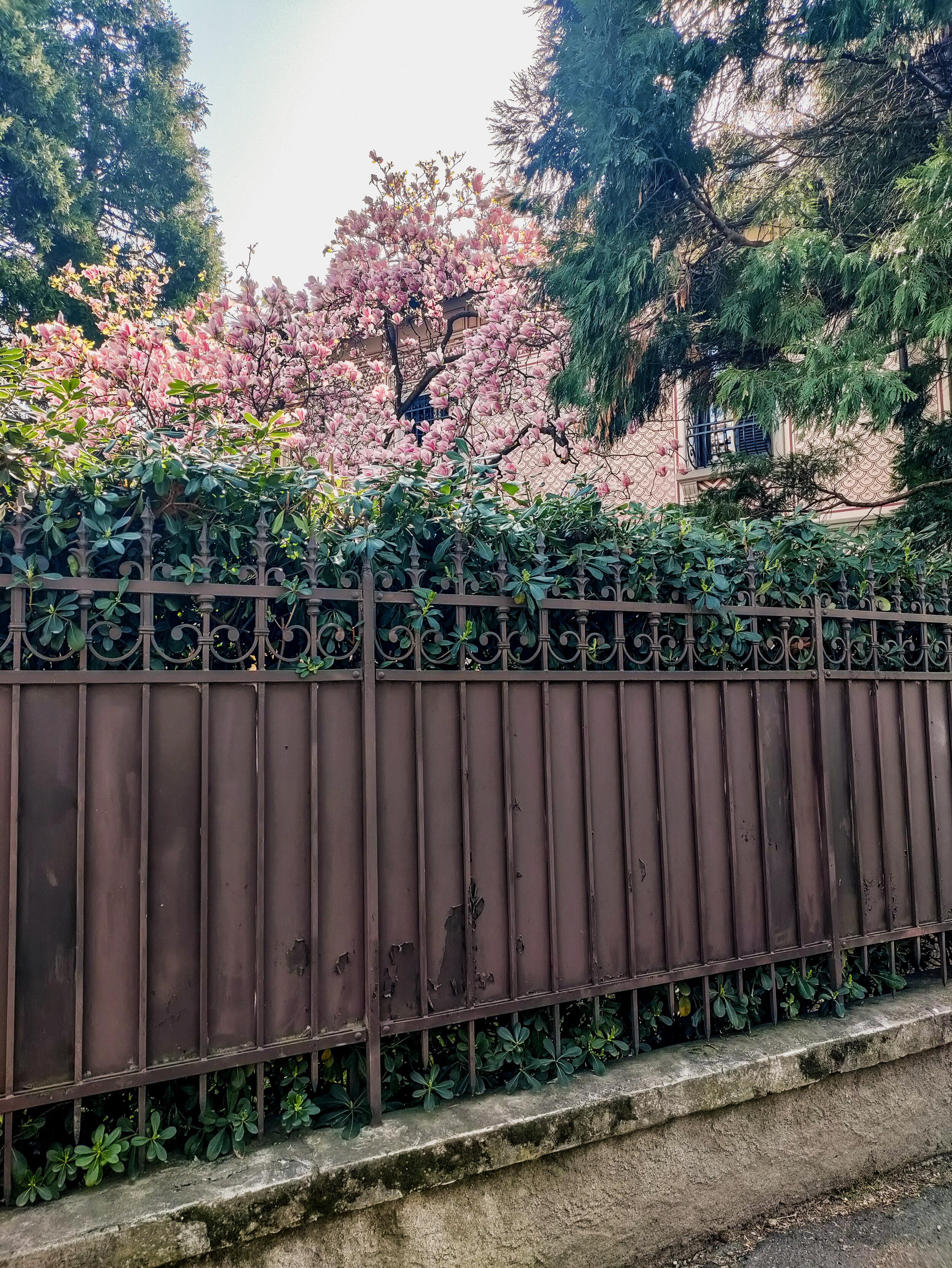 Full Spring (4).jpg