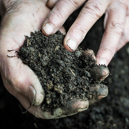 THE SOIL - Our soil is classical Paso Robles Linne Calodo, a recessed sea bed composed of sandy calcareous clay loam with mineral rich shale and chunks of limestone. Every season our soil is rejuvenated with our own aged compost inoculated with biodynamic preps.