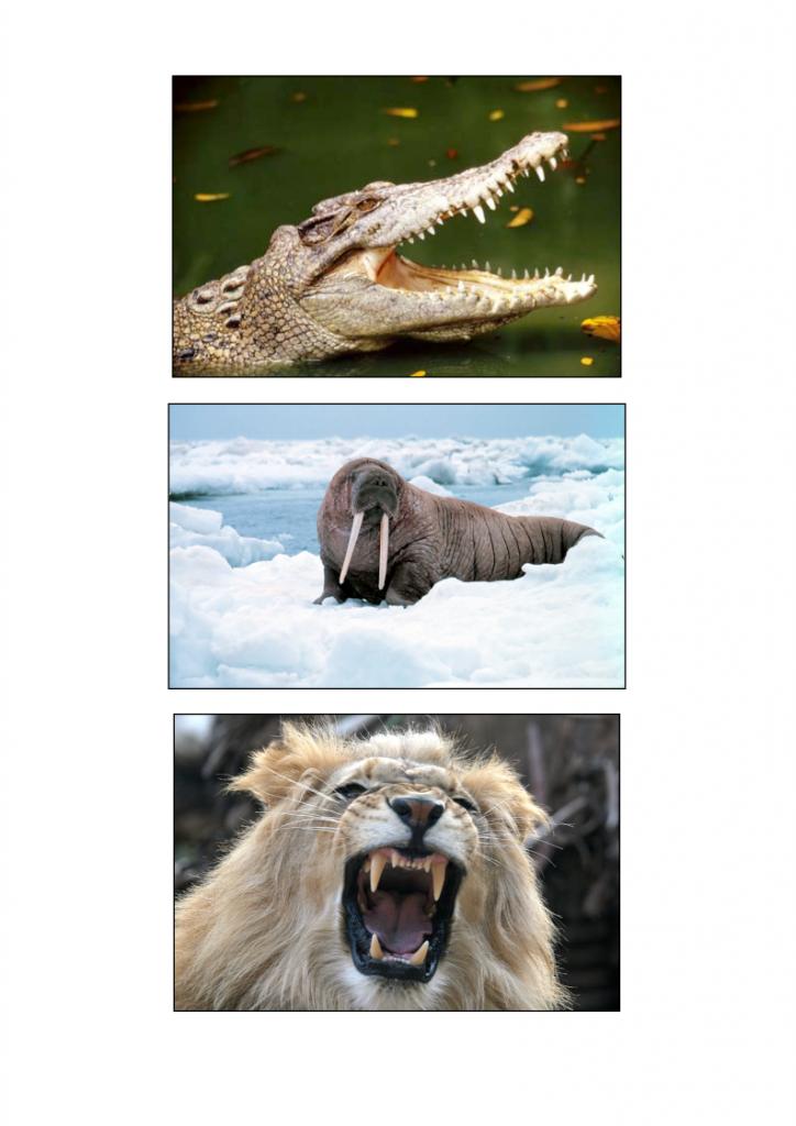 21God-gave-us-teeth-lessonEng_003-724x1024.png