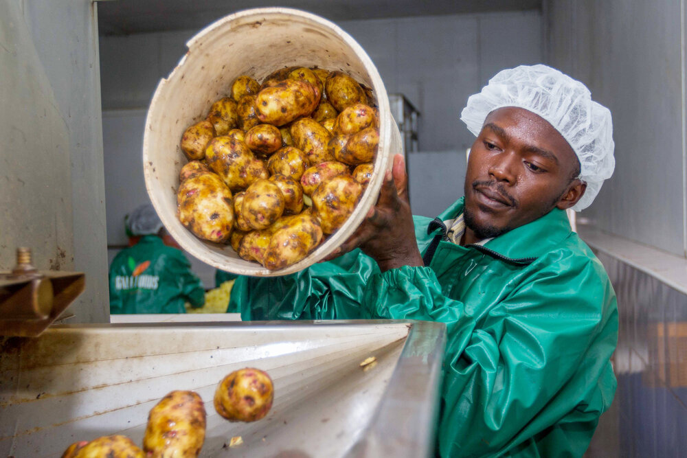GAEA Foods cleans and processes potatoes for use by restaurants in Nairobi. They provide a livelihood to nearly 450 small-scale farmers in Kenya's Rift Valley.