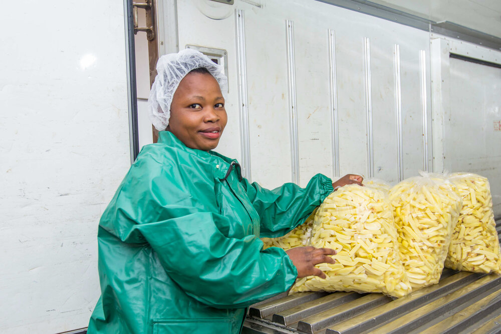 A worker at GAEA Foods loads cut potato chips onto a truck for delivery. GAEA Foods employs 39 people.