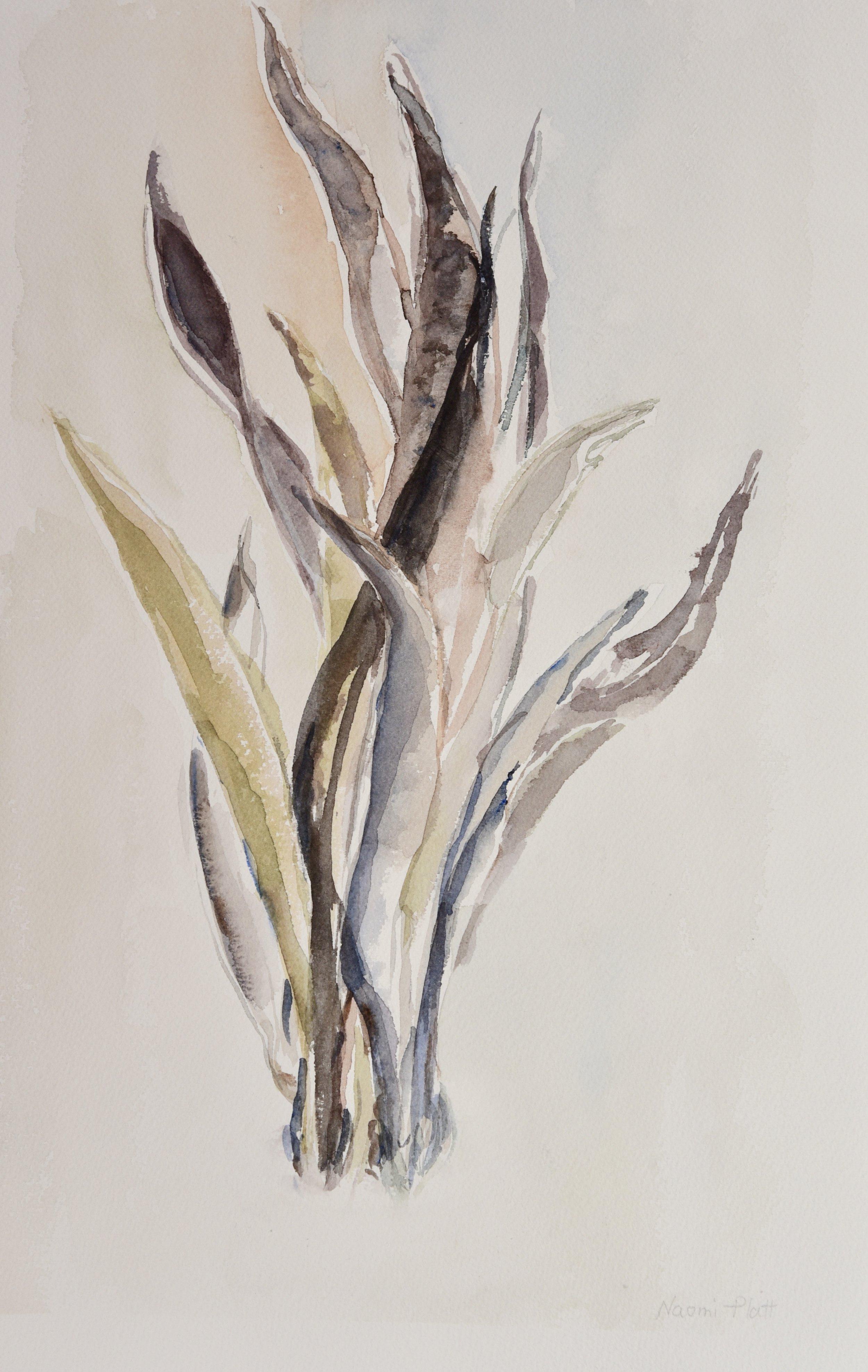 Still Life - Plant_40(1).jpg
