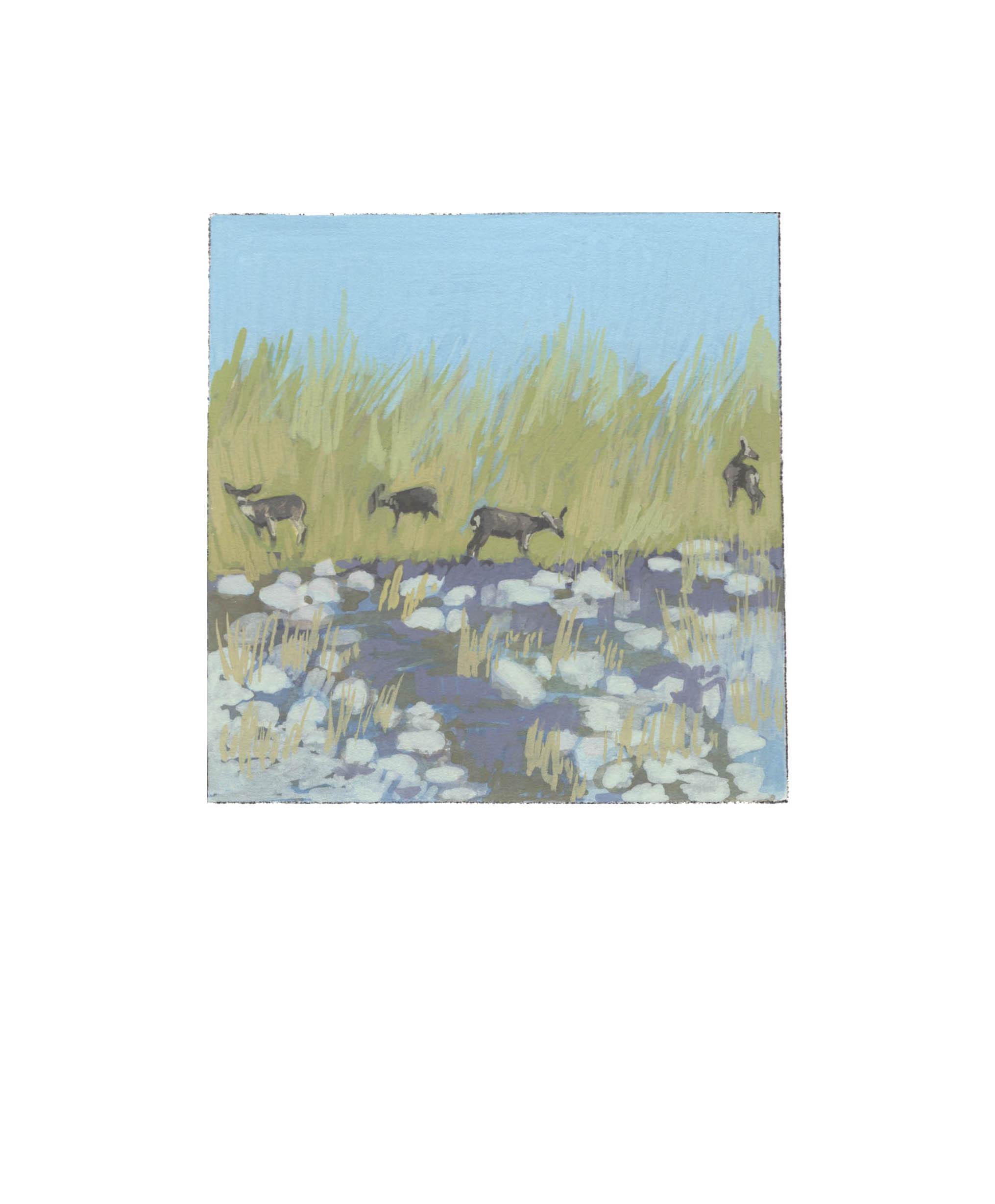 Cachuma Mule Deer