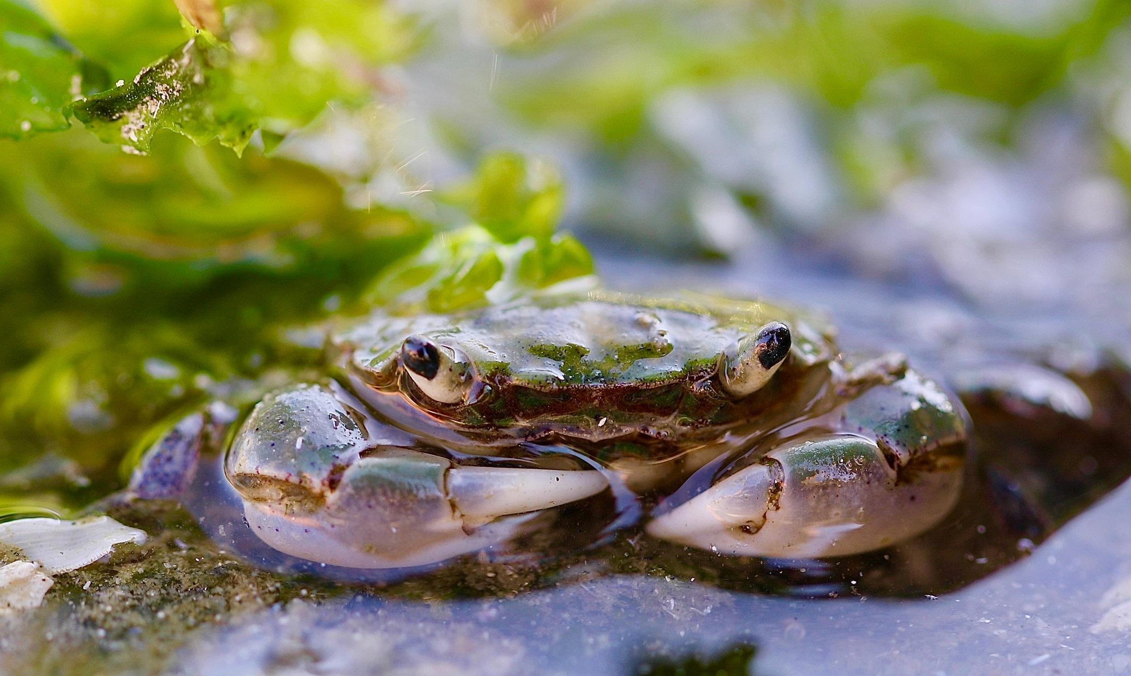 crab9+%281%29.jpg