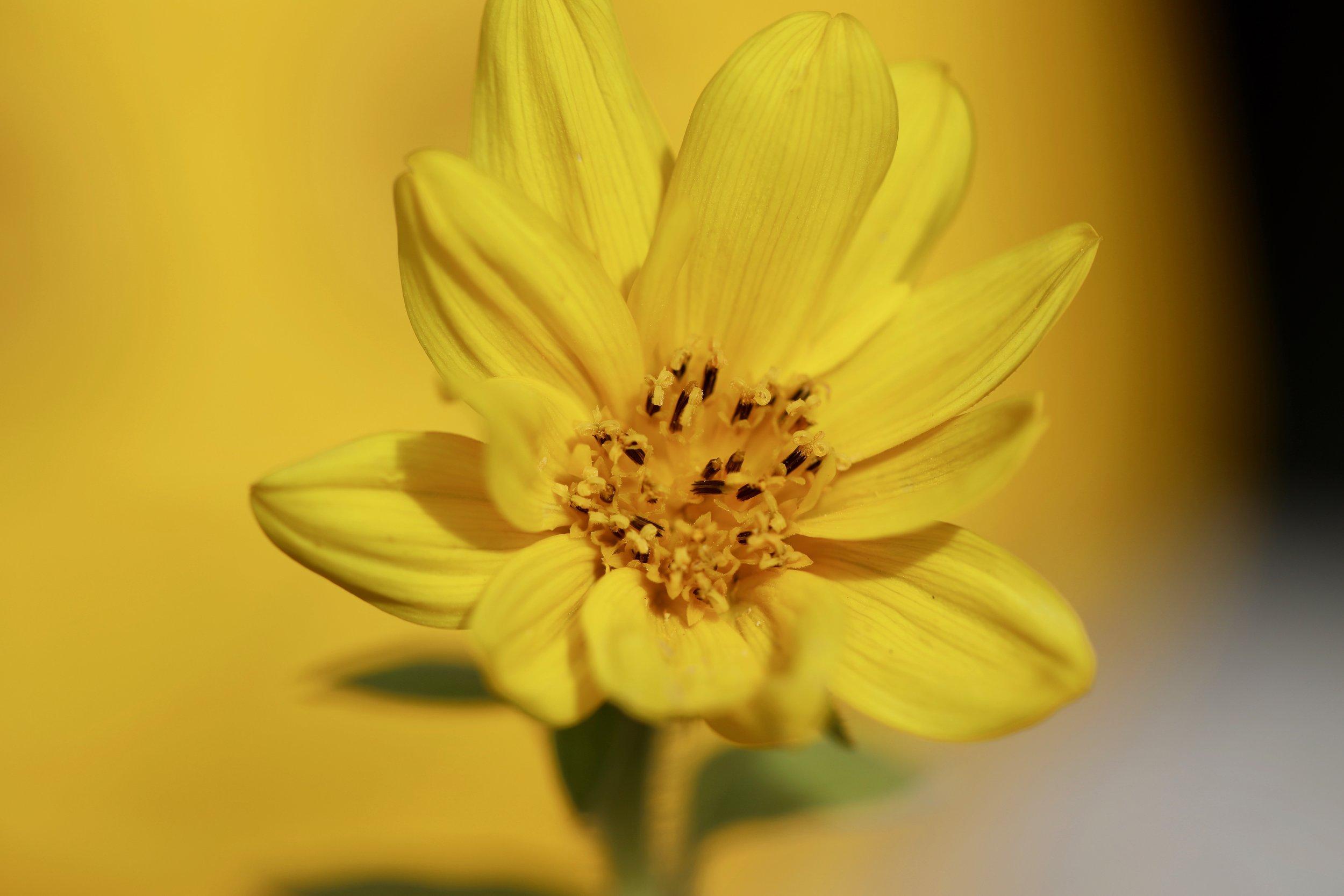 Waabigwan is the word for Flower in Anishinaabemowin.
