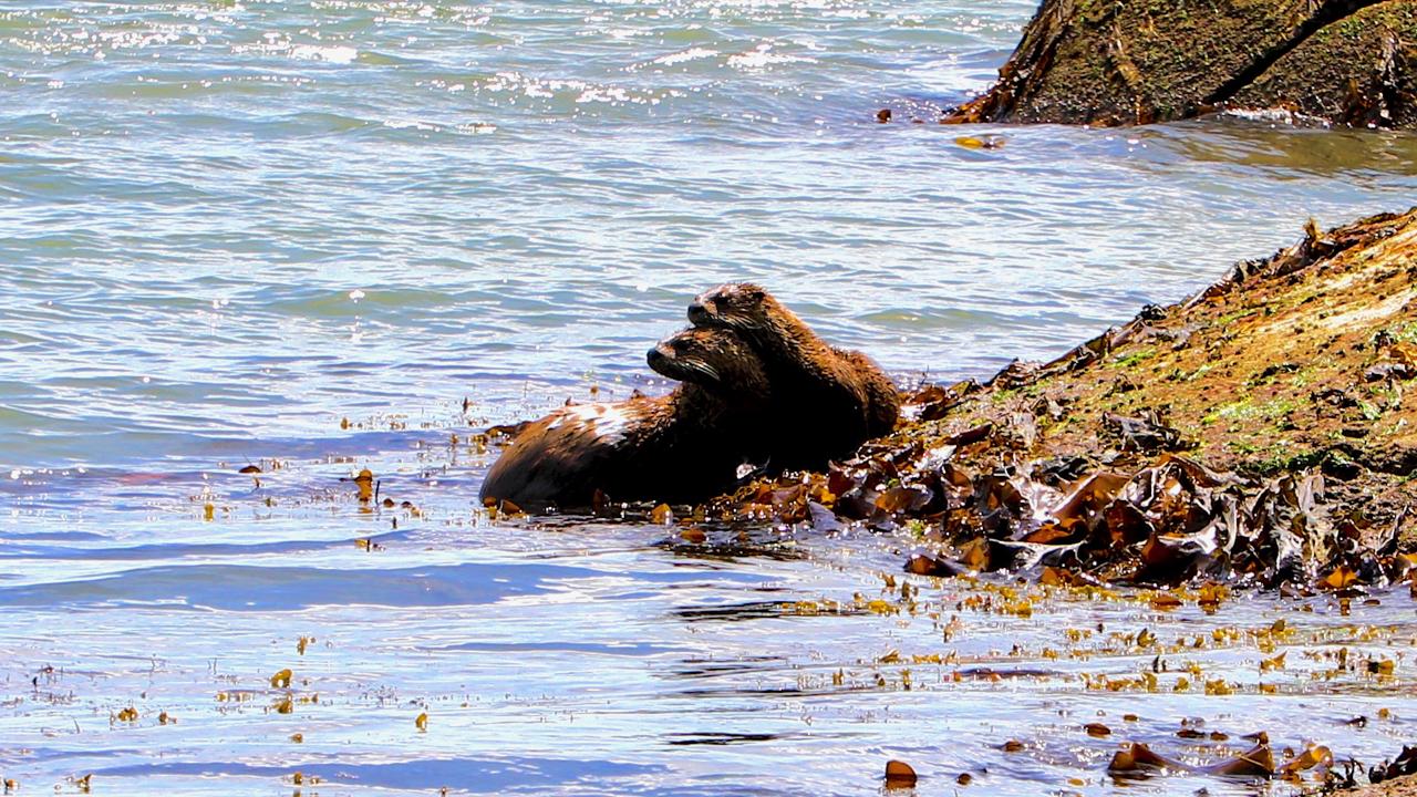 otters2.jpg