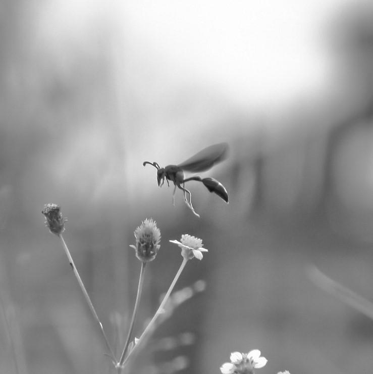 Wasps -