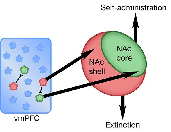 Figure 8.jpg