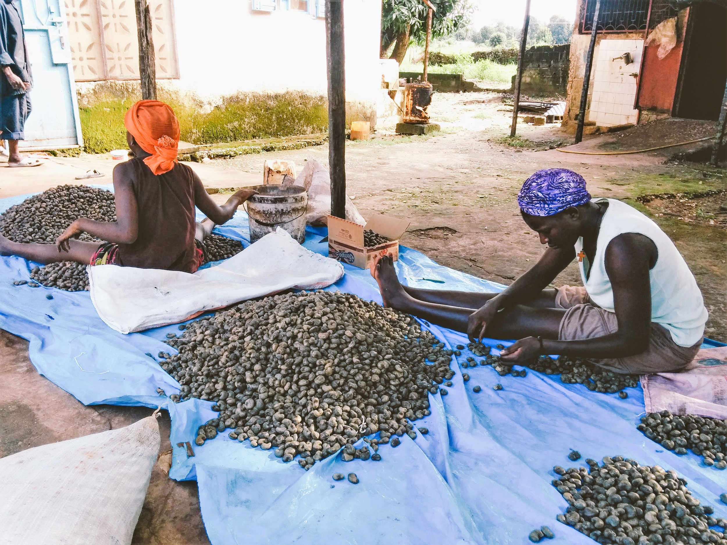 Workers sorting cashew nut