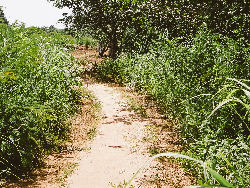 An overgrown road selected for rehabilitation