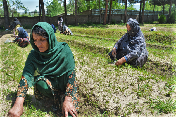 Jawar Bibi (left) prepares a plot of land in the community garden for growing a variety of saplings. (Photo: WFP/Ann Nallo)