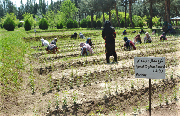 WFP and Shelter For Life are helping women cultivate almond, persimmon, pistachio, pomegranate and walnut trees to be sold to orchards. (Photo: WFP/Ann Nallo)