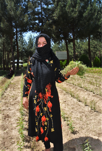 Mah Gul, 24, is learning new gardening skills to help support her seven younger siblings and her parents, who are too old to work. (Photo: WFP/Ann Nallo)