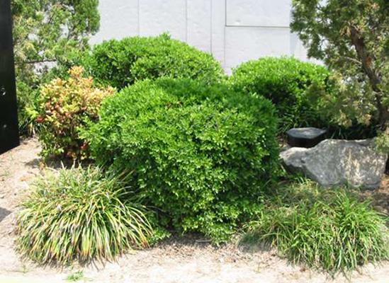 TREE & SHRUB CARE -