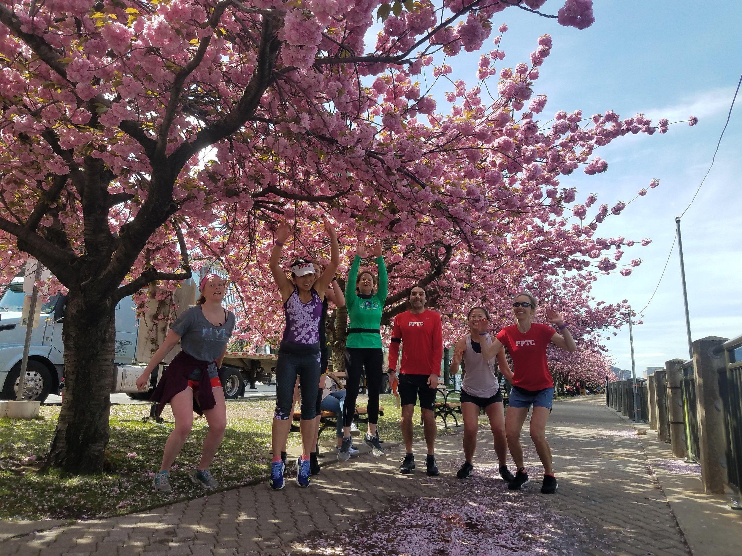 CherryBlossomRun.jpg