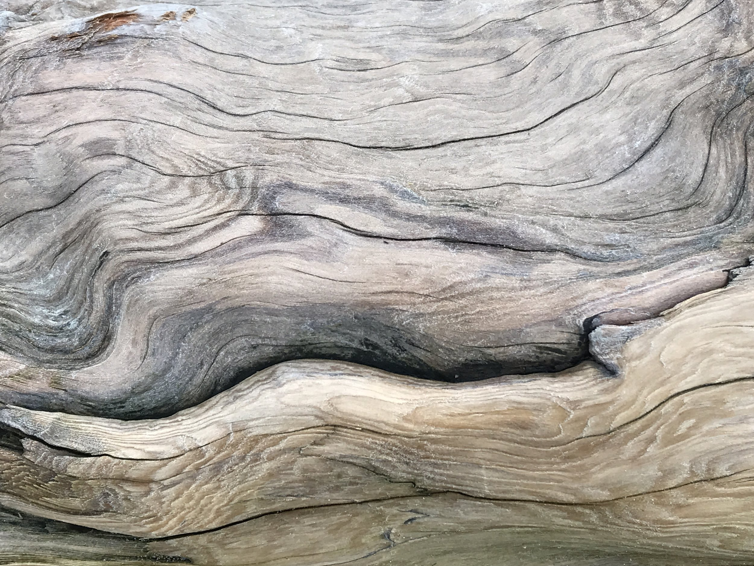driftwood (2).jpg