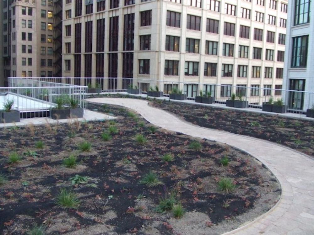 ecogardens-chicago-federal-building-11.jpg