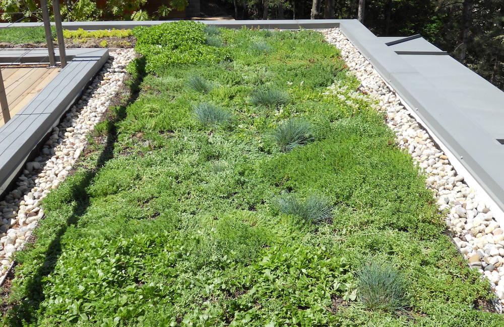 ecogardens-SW-michigan-green-roof-15.jpg