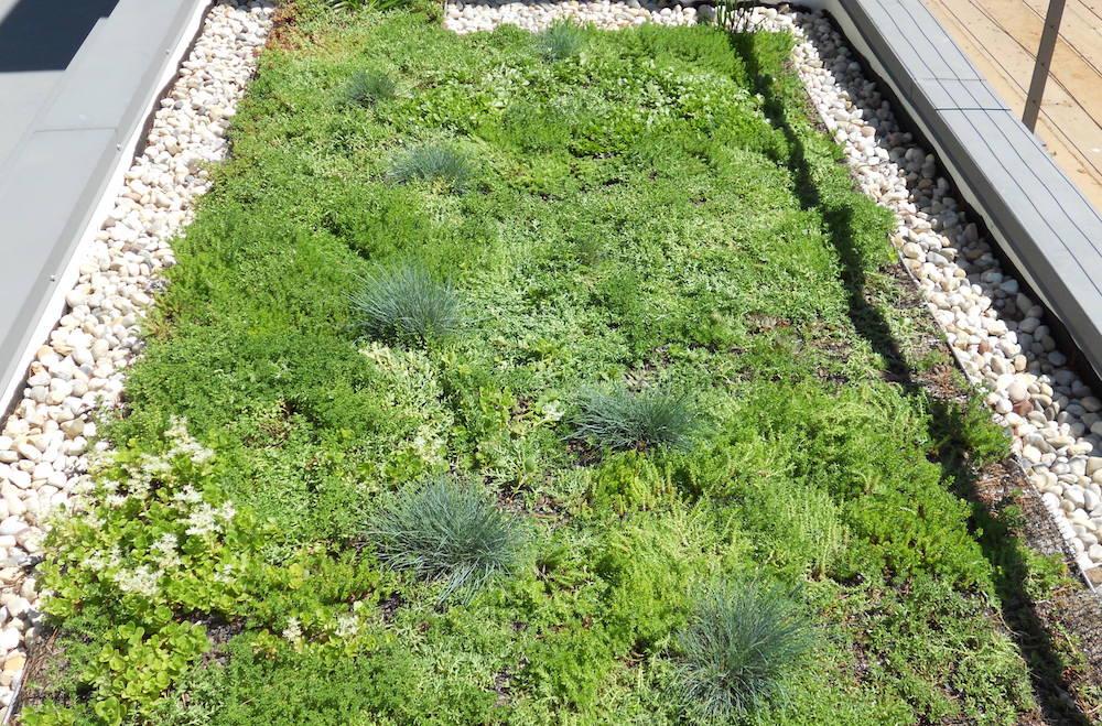ecogardens-SW-michigan-green-roof-17.jpg