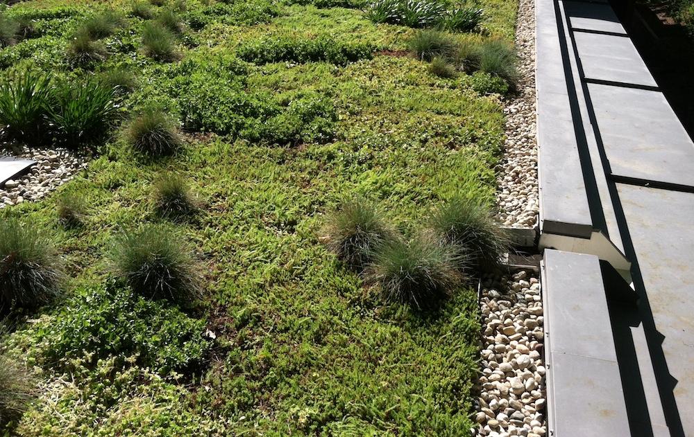 ecogardens-SW-michigan-green-roof-19.JPG