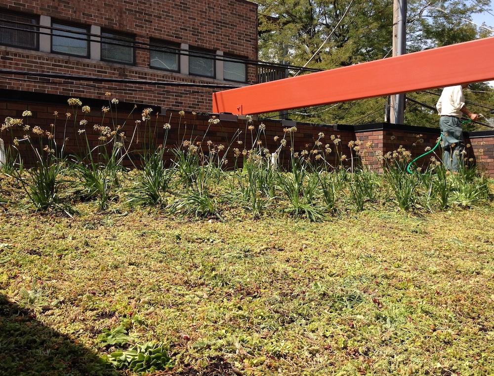 ecogardens-lincoln-park-contemporary-22.JPG