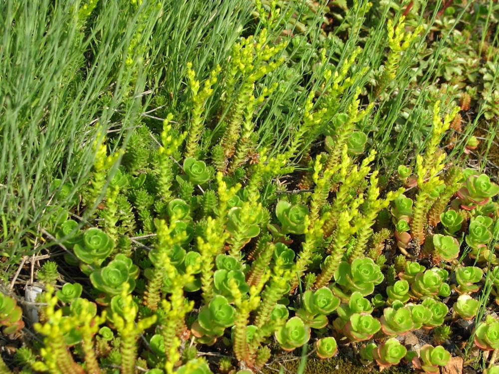 ecogardens-walmart-chatham-23.JPG