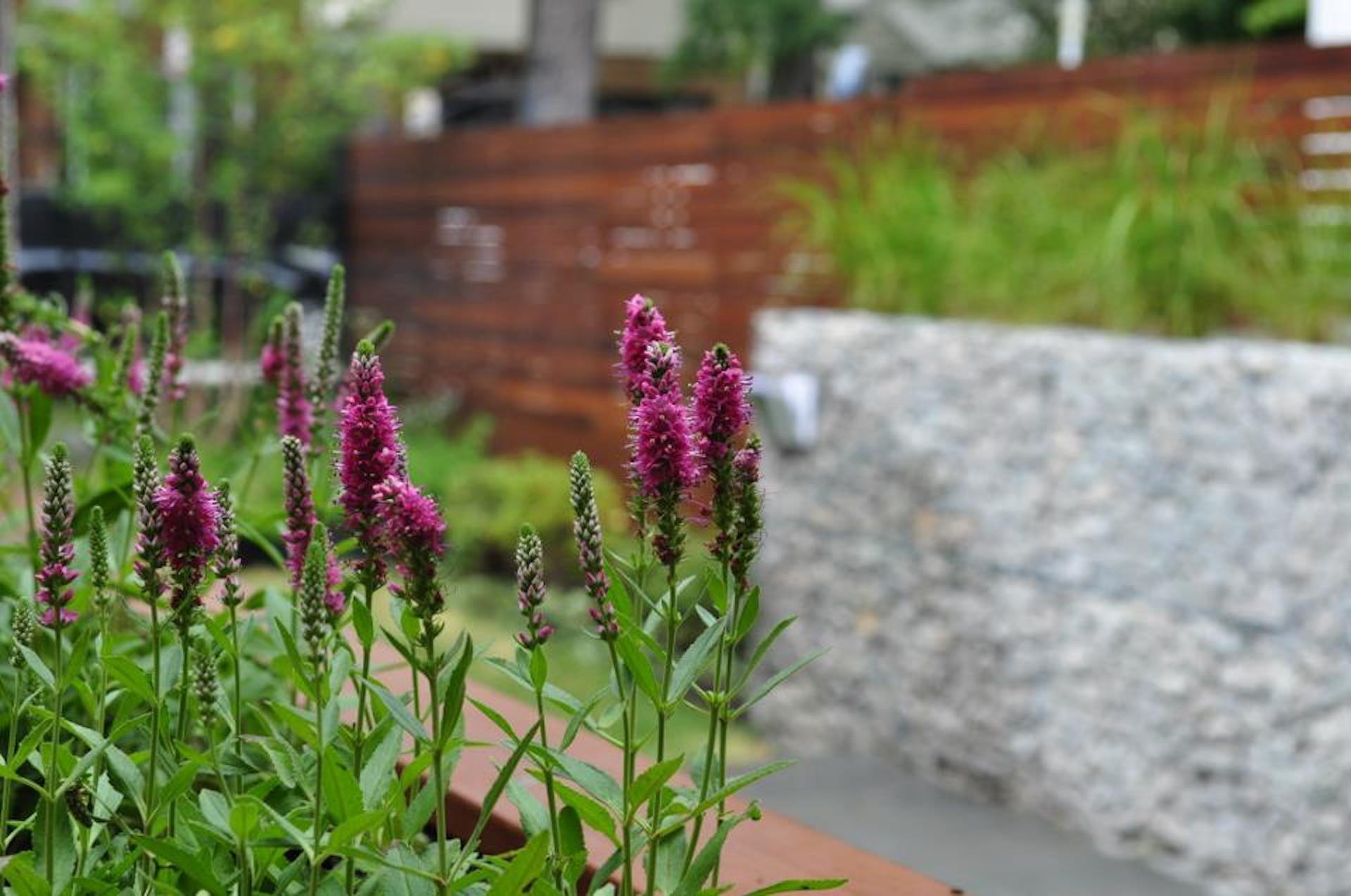 Bucktown Modern Sideyard