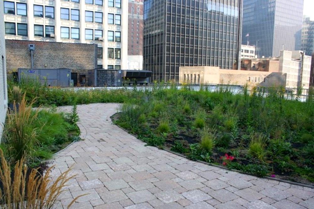 ecogardens-chicago-federal-building-13.jpg
