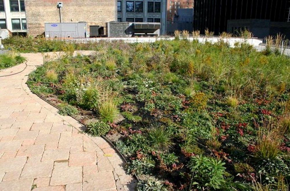 ecogardens-chicago-federal-building-3.jpg