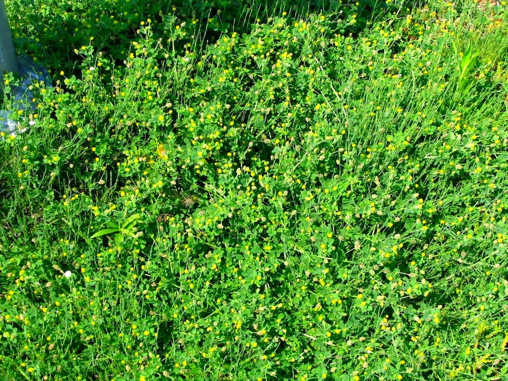 ecogardens-walmart-chatham-29.JPG