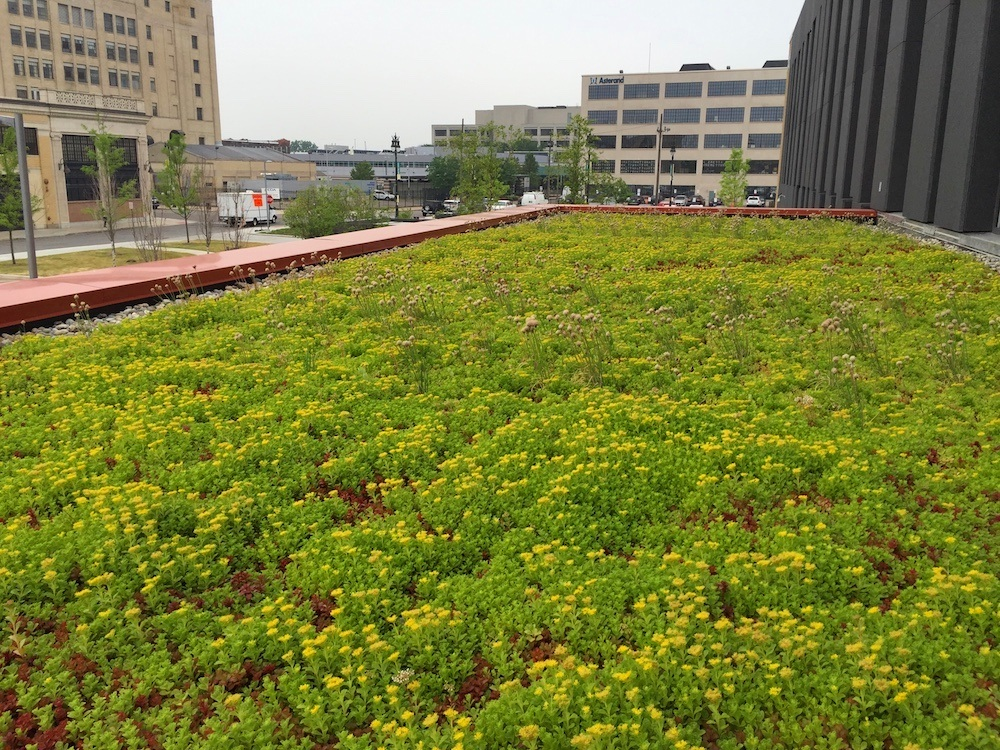 ecogardens-wayne-state-university-2.jpg