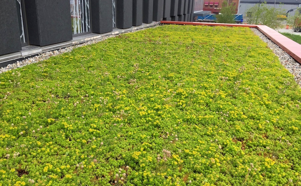 ecogardens-wayne-state-university-3.jpg
