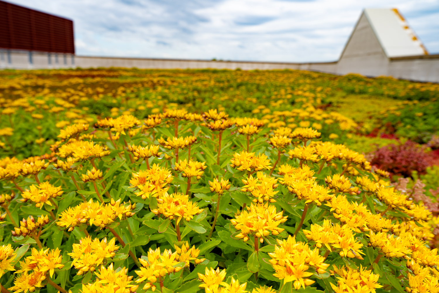 Lake Forest High School Green Roof by Ecogardens-2.jpg