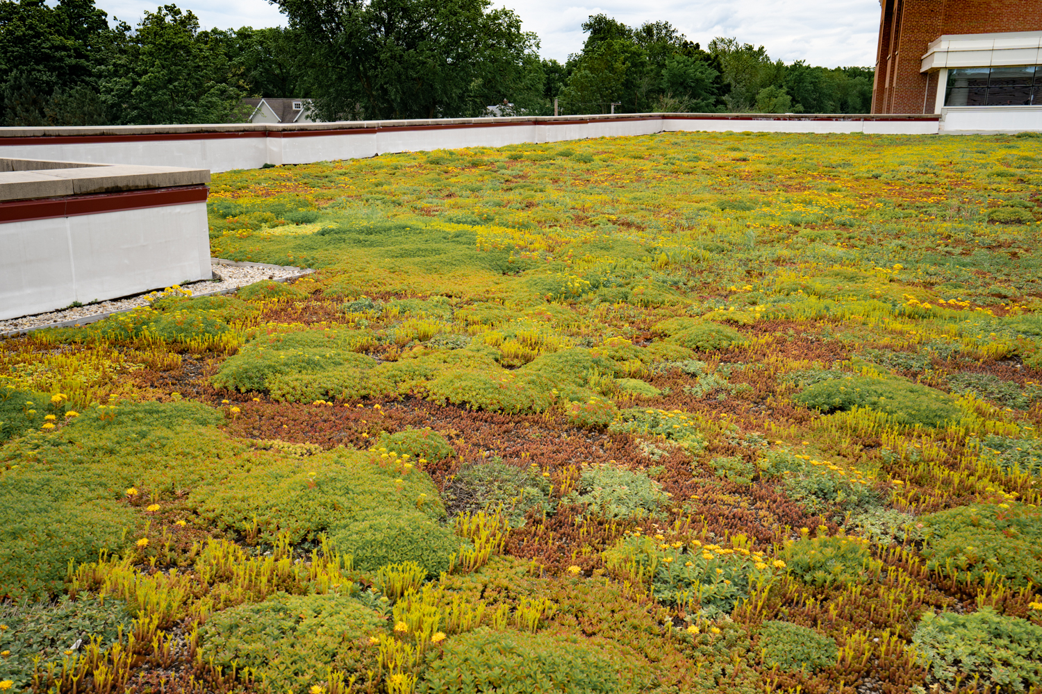 Lake Forest High School Green Roof by Ecogardens-4.jpg