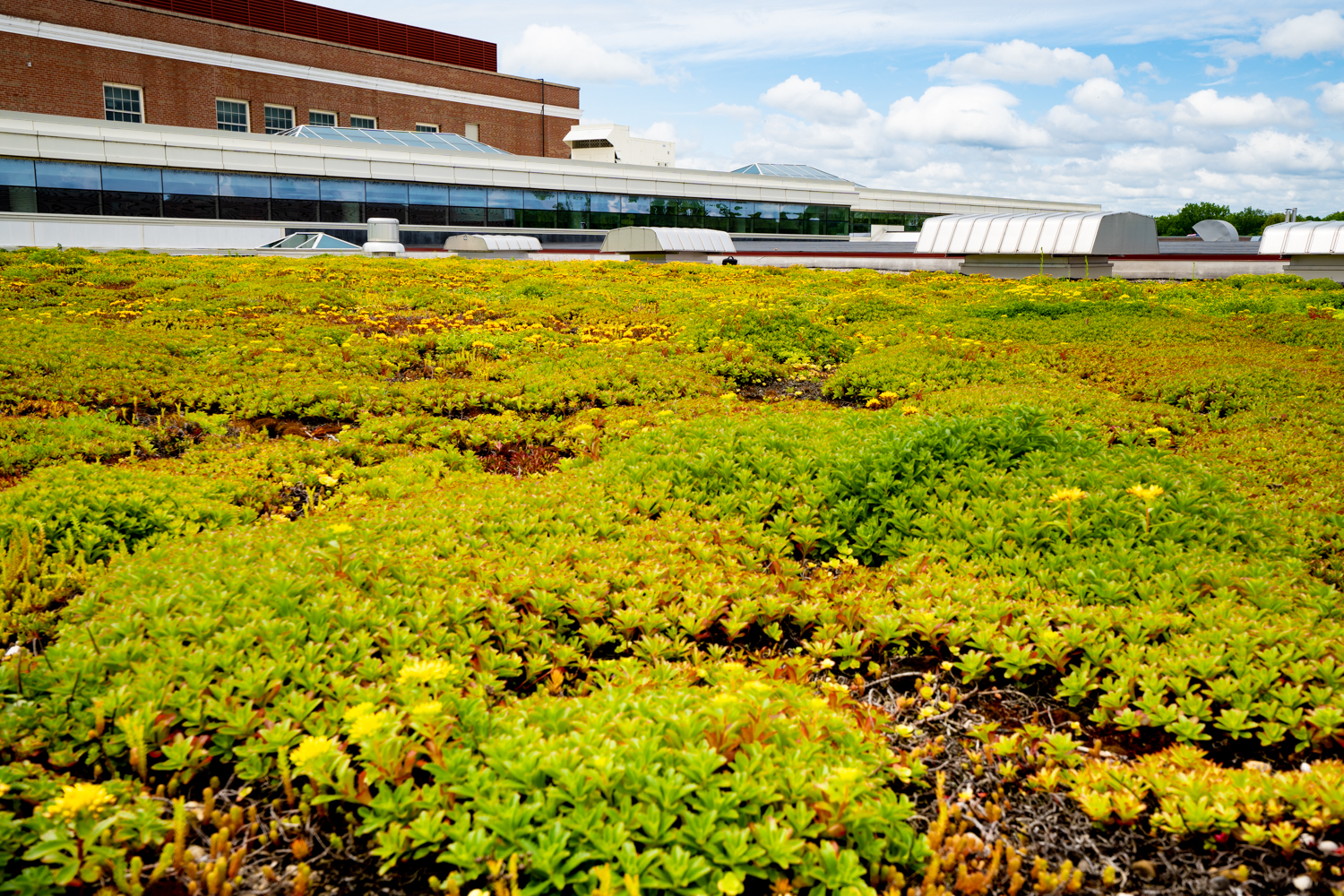 Lake Forest High School Green Roof by Ecogardens.jpg