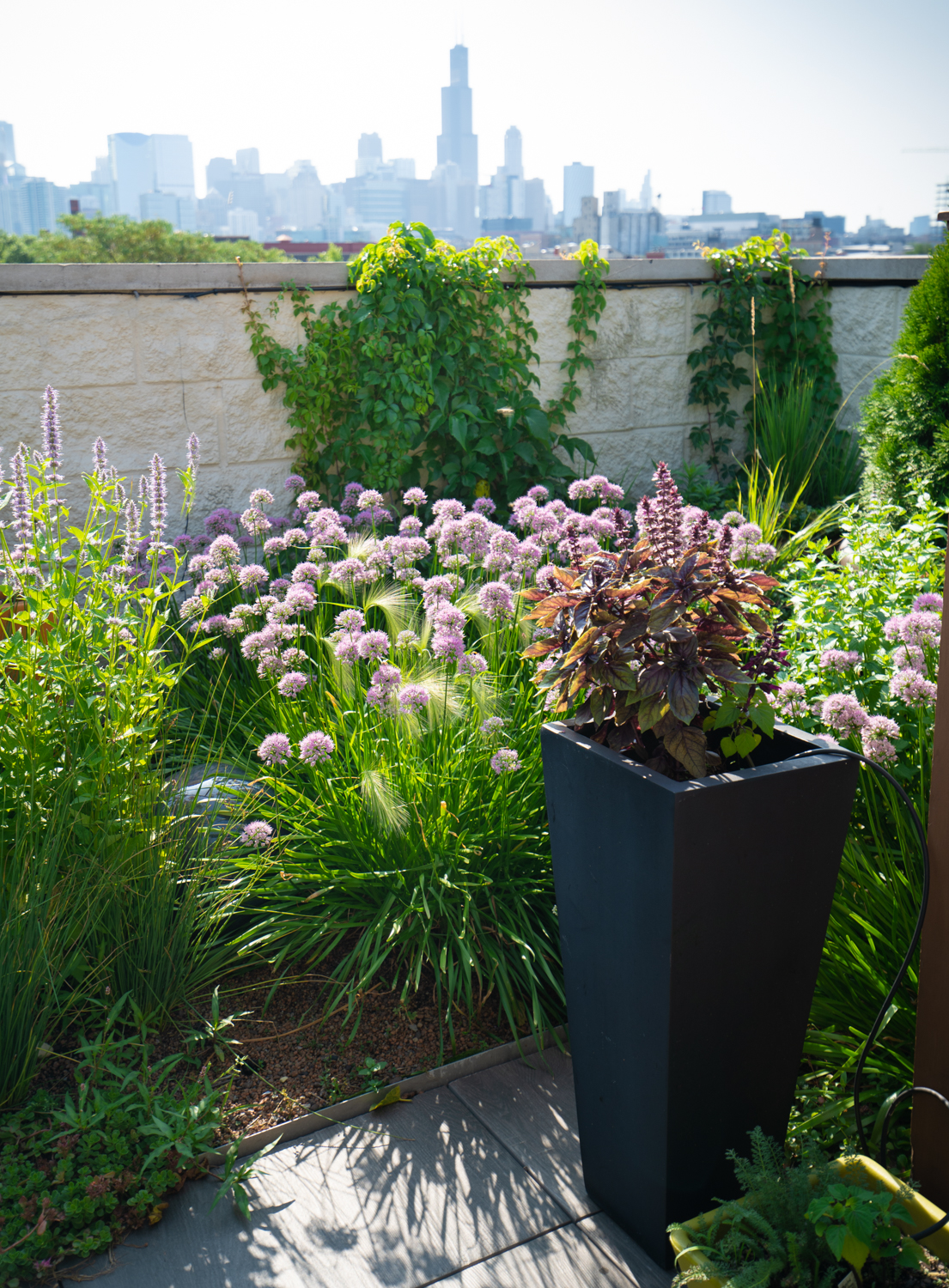 Chicago Roof Garden by Ecogardens-5.jpg