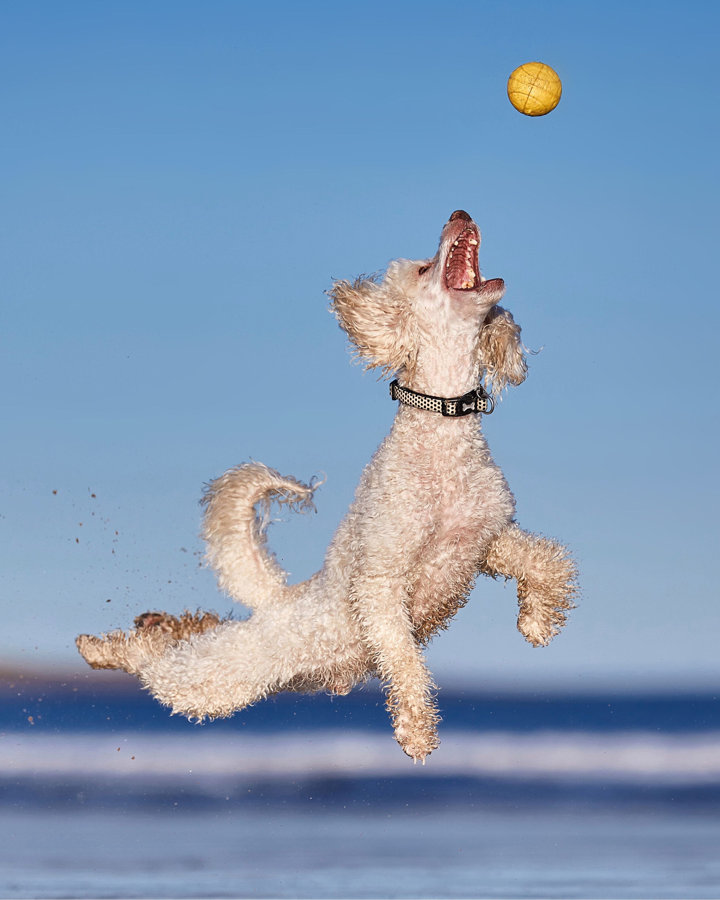 Ball Is Life_DarrenHall.jpg
