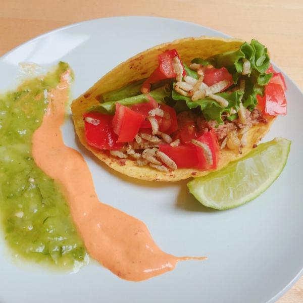Waxworm tacos