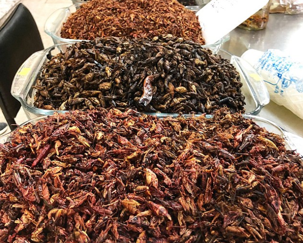 Seen: Bugs that Joy found for sale at a market on during a trip to Mexico trip which is common in the country.
