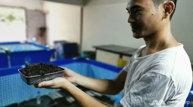 One of Mr Wu's employees, Nik Muhammad, said that the farm is largely self-sufficient as it breeds its own supply of crickets. (Photo: Amir Yusof)