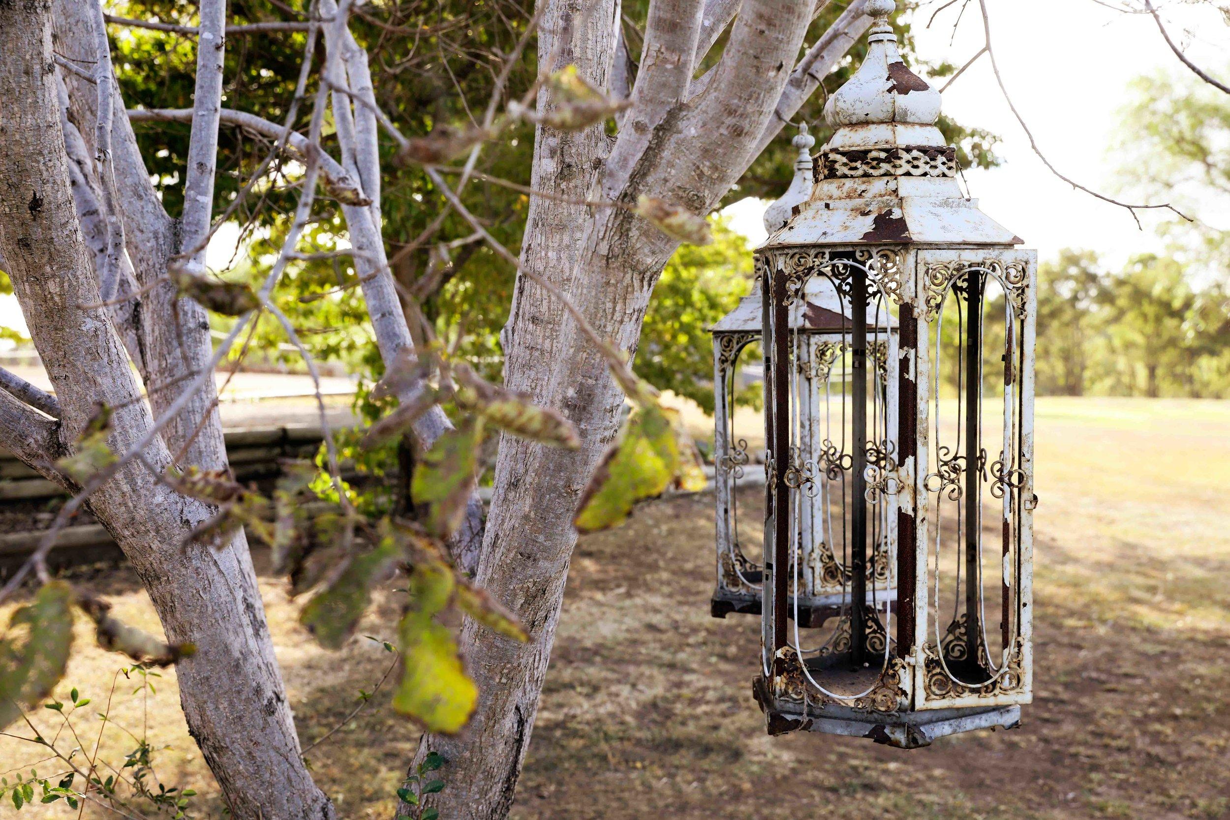 Willow Tree New-24.jpg