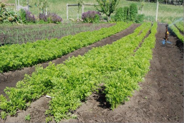 local organic farming.png