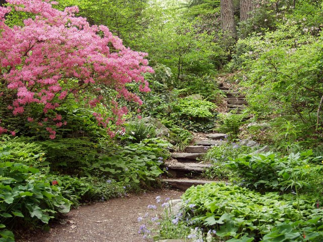 photo courtesy of Garden in the Woods