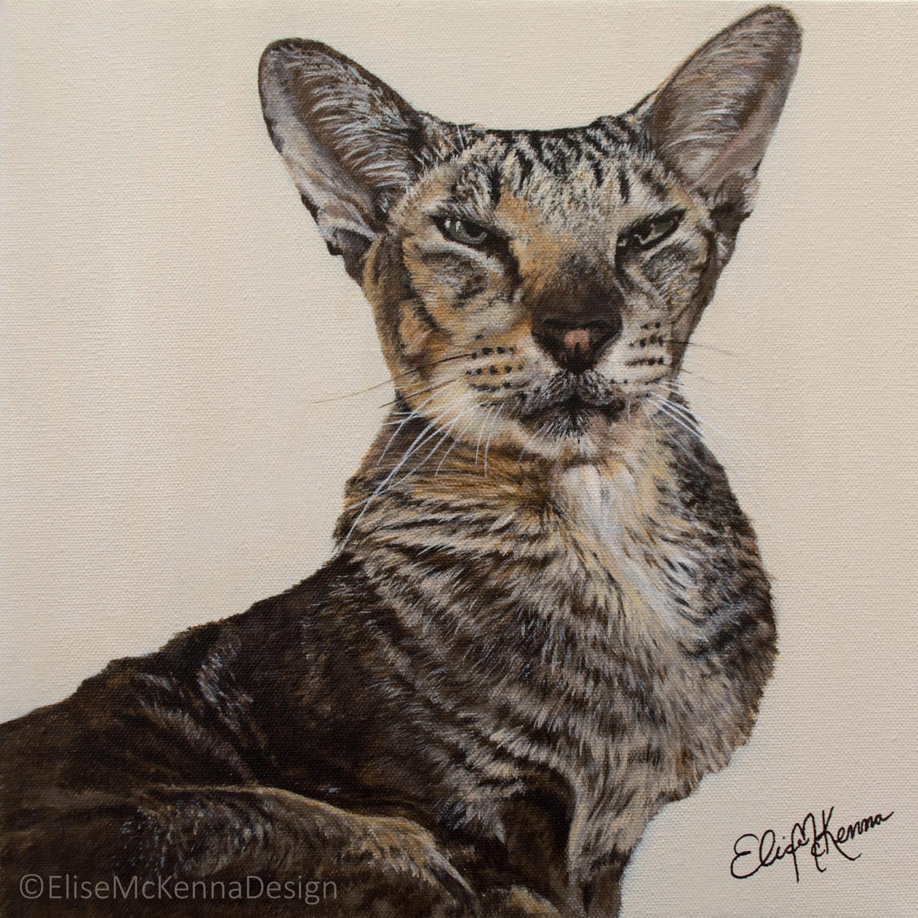 "Kitten; sphynx;  acrylic on canvas; 12 x 12 x 1"""