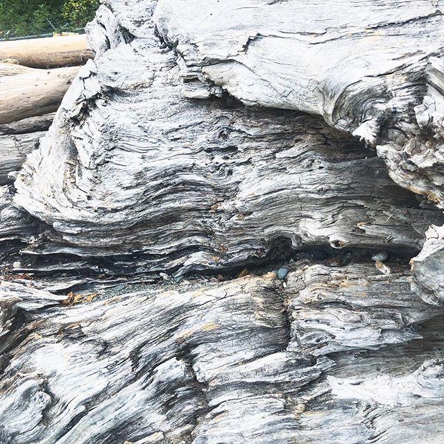 Natural textures 🖤 . . . #bloodmoon #texture #aesthetic #boho #beach #ocean #gorgeous #closeup #driftwood #beautiful #beautifulbritishcolumbia