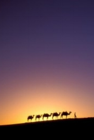 camel-caravan.jpg