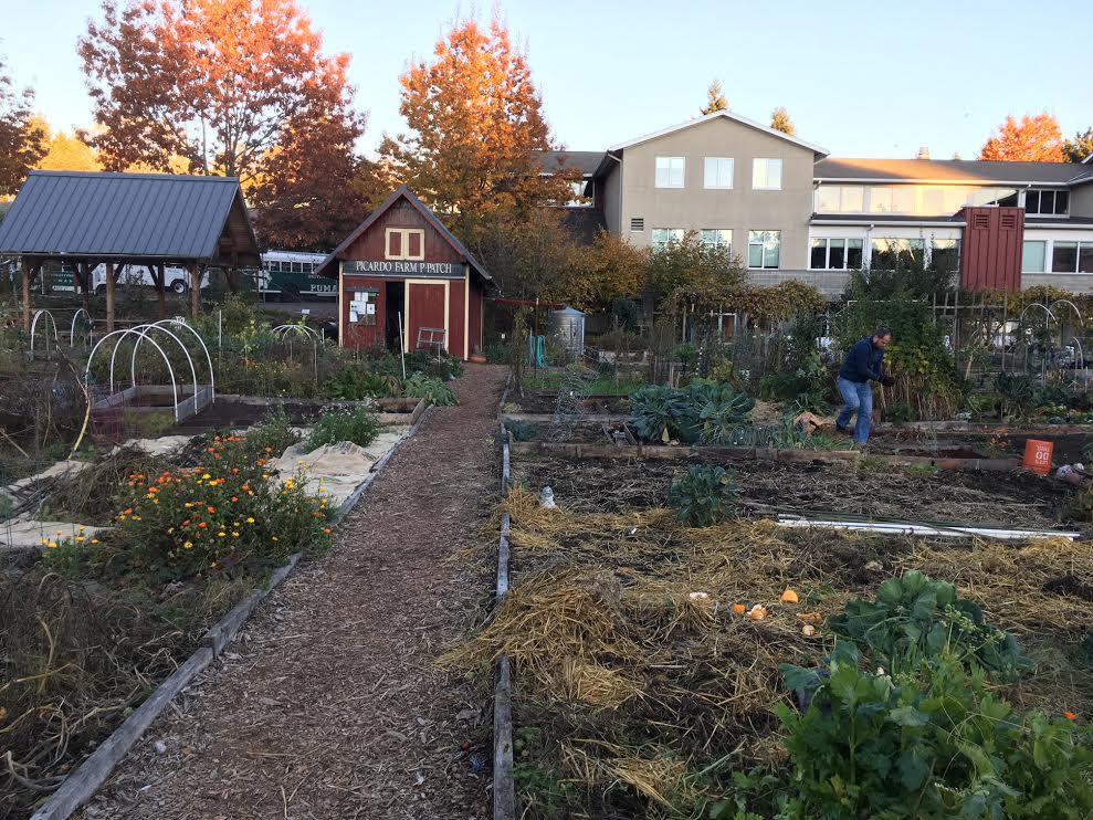 Picardo's Farm