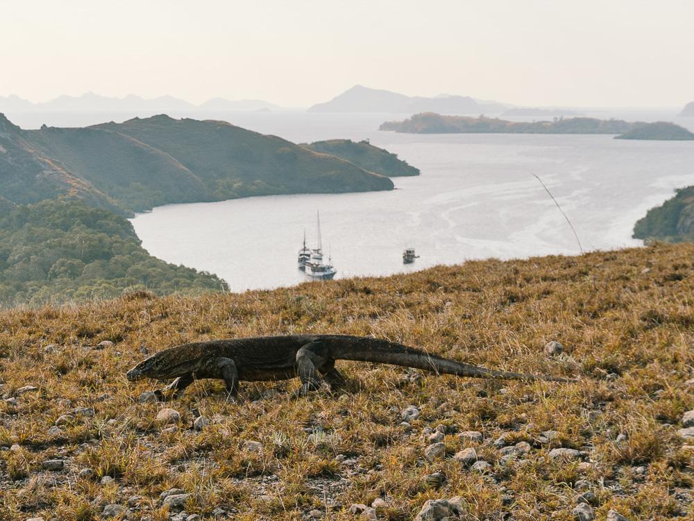 Indonesia-Flores-Rinca-Komodo-Island-Elen-Pradera-7.jpg