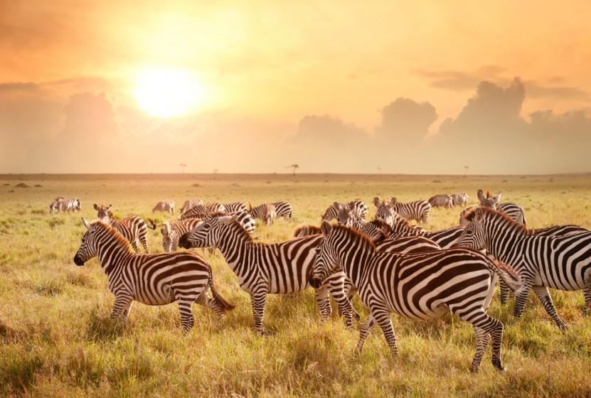 Africa_Kenya_Maasai-Mara_Zebras_Sunset_Stock_000022795487_Medium-831x560.jpg